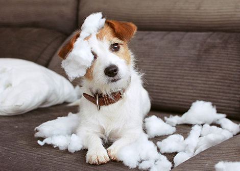 mi perro muerde todo